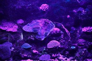 Cancun • Purple Reef