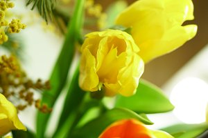 Bouquet of yellow and red tulips