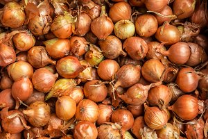 Lot of onion,  organic products