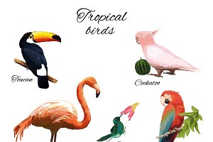 Colorful Exotic Fauna Concept