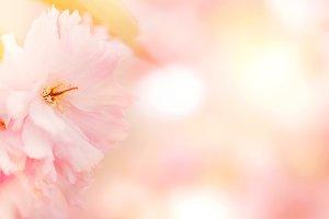 Tender pastel pink flower background