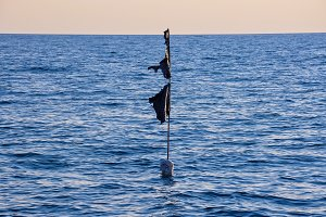 black buoy in the sea