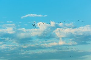 Birds flying in the blue sky .