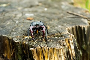 Endangered species of legged beetles.
