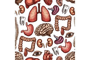 Anatomy seamless pattern background of human organ