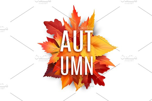 Autumn Foliage Leaf Vector Poster Of Fall Leaves