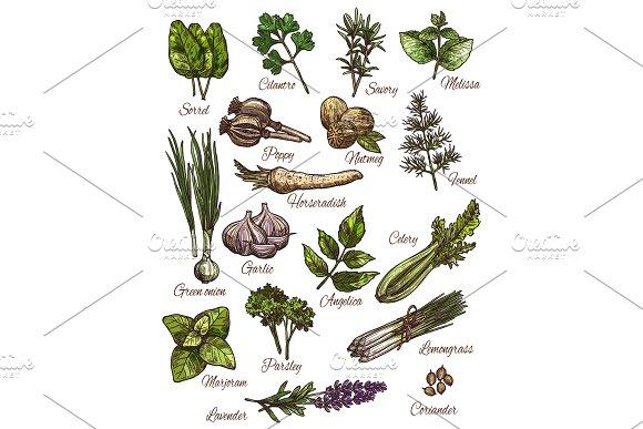 Spice Herb And Fresh Leaf Vegetable Sketch Design