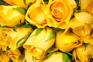 Yellow roses with gift box on wooden background.
