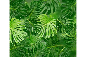 Tropical green leaves