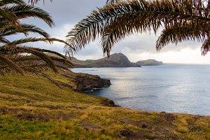 Palm trees and Atlantic Ocean coast