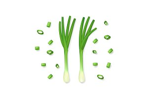 Realistic Spring Onions. Vector