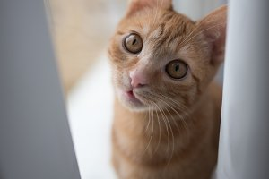 Cute ginger kitten sitting on window