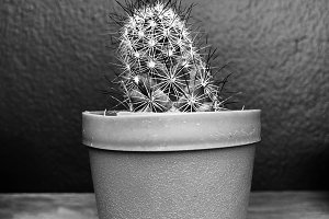 Small cactus close up.