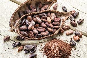 Cocoa powder and Cocoa