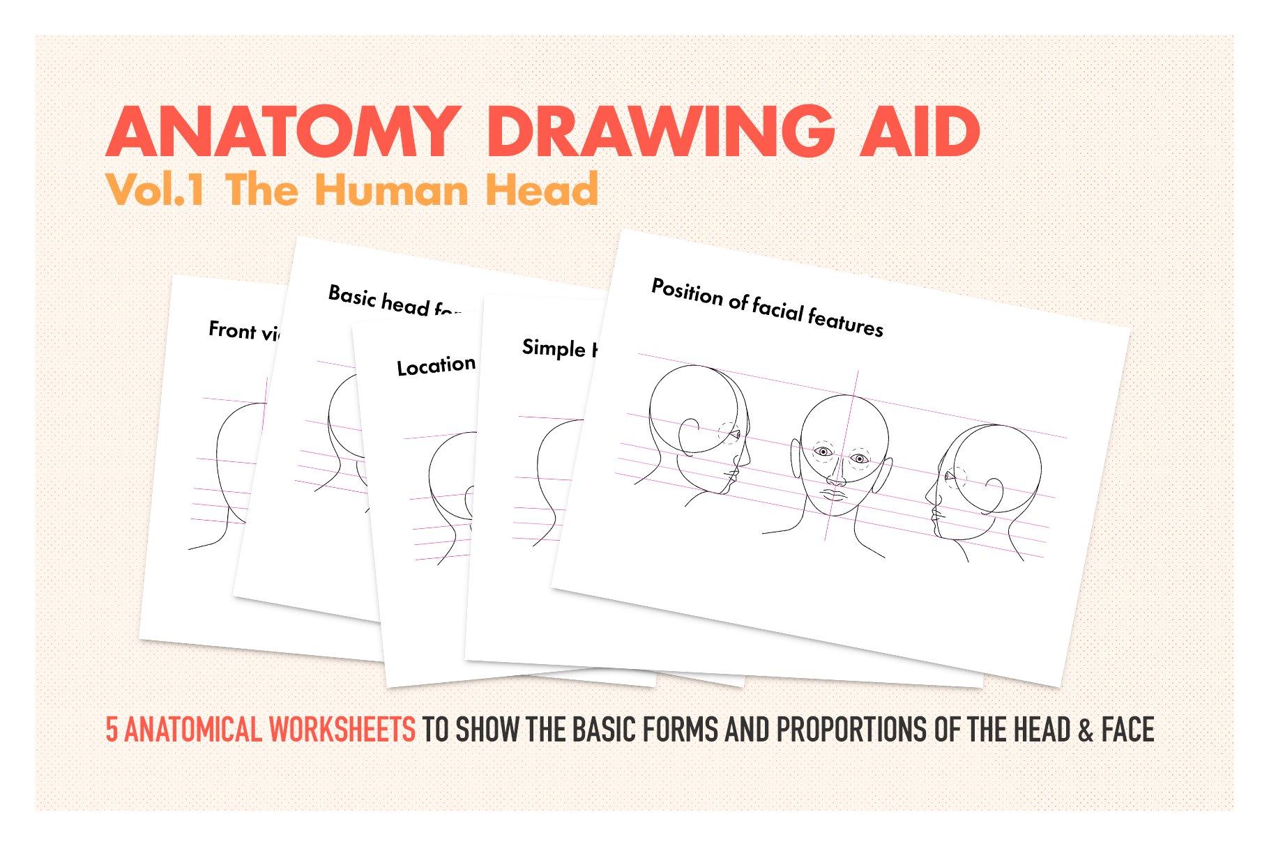 Anatomy Drawing Aid The Human Head Illustrations Creative Market