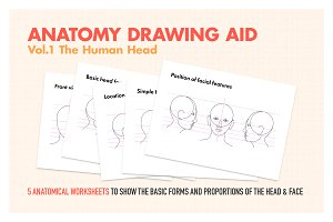 Anatomy Drawing Aid - The Human Head