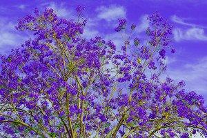 Purple flowers tree Minimal
