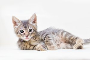 Kitten Lounging on white background