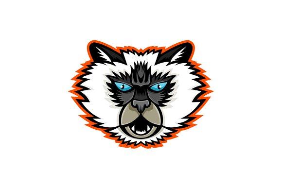 Himalayan Cat Mascot in Illustrations