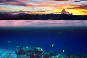 fish in the tropical ocean