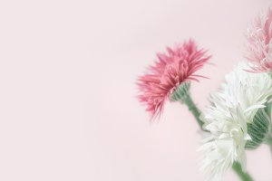 Pastel flowers at pink background