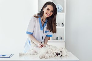 veterinarian doctor examining dog