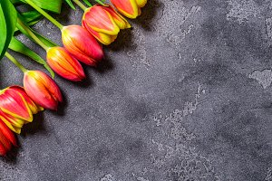 Tulips on grey background