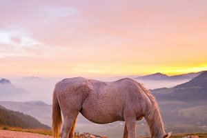 Horse Grazing the Grass at Sunrise