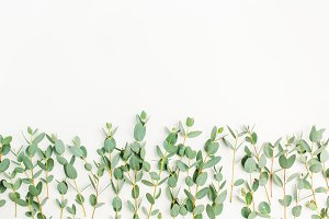 Eucalyptus branches background