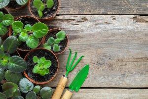 Planting potted flowers, shovel rake