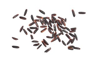 Black wild rice isolated on white background close up. Top view. Flat lay
