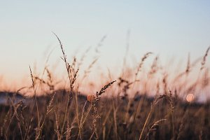 Tall grass at dusk