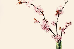 Cherry blossom flowers in vase on white background, toned