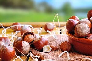 Hazelnuts on a wooden table in field