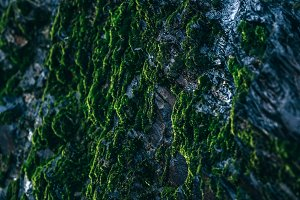 Mossy Rock Early in The Morning