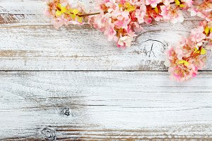 Cherry Blossoms on White Wood
