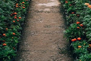 Plant Nursery Path
