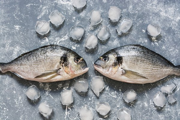 Raw fish on a gray background with…