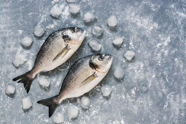 Fresh dorado fish on a gray backgro…