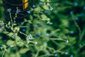 Tiny Red Ladybug