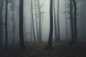 Mysterious dark foggy forest