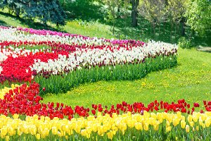 Tulips and green grass in the park
