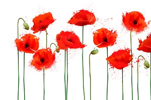Background with red poppies flowers