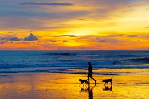 man walking with the dogs on a beach
