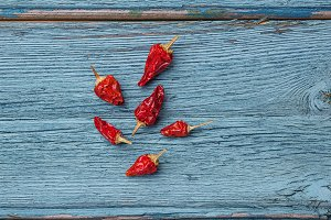 Red chili pepper on blue background