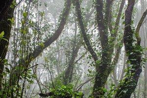 Garajonay national park, fog forest