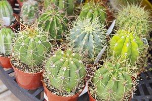 Outdoor Shop of Cactus Plants
