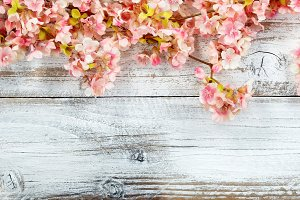 Spring Background of Cherry Blossoms