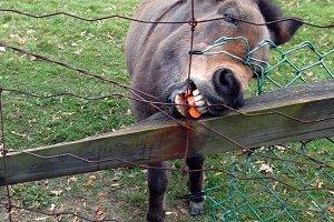 Donkey Chomp