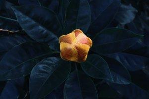 Abstract yellow bud on dark